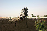 Lt. Jim Lazak, of Company B, 2nd Battalion, 508th Parachute Infantry Regiment scrambles across a mud-brick wall while on patrol in the Arghandab valley, near Kandahar, Afghanistan. March 28, 2010. DREW BROWN/STARS AND STRIPES