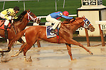 03 10 2009: Belmont/Travers winner Summer Bird with Kent Desormeaux hold of Quality Road to win the 91st running of the Grade I Jockey Club Gold Cup over1 1/4 mile on a sloppy track at Belmont Park, Elmont, NY