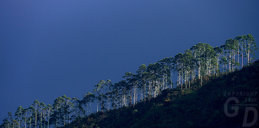 Tree-line and approaching storm Cocoon Hills, Nuwara Eliaya