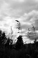 Chatfield Park, Colorado (Black & White)