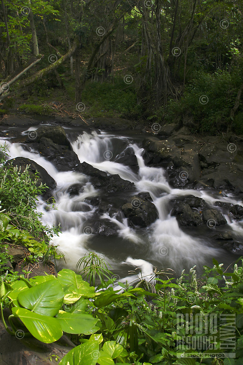 Kapena stream, located just below Kapena falls invites one to relax in its tranquil flow surrounded by lush tropical vegetation. Located just off the Pali Highway on Oahu.