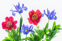 Boquet of iris and peony flowers.