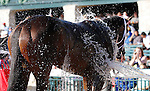 LEXINGTON, KY - APRIL 16: Tepin cooling off after winning the 28th running of the Coolmore Jenny Wiley (Grade 1) $350,000 at Keeneland race course for owner Robert E. Masterson, jockey Julien Leparoux, and trainer Mark Casse.  April 16, 2016 in Lexington, Kentucky. (Photo by Candice Chavez/Eclipse Sportswire/Getty Images)