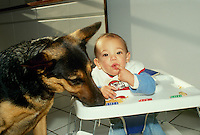 German shepard shares snack with toddler
