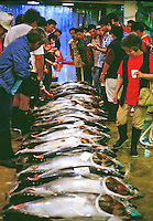 fish buyers at the United Fishing Agency's daily fish auction near Kewalo Basin on Oahu