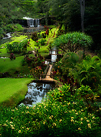 Gardens and stone dam.. Mahi Mahakonia mahogany plantation. From Wai Koa Loop Trail Kauai, Hawaii
