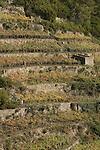 Dans les vignes entre Corniglia et Manarola (village en contrebas) Parc national des Cinque Terre. Ligurie. Italie.