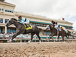 HALLANDALE BEACH, FL - MARCH 04: #4 Bird Song with Julien Leparoux up wins the Fred Hooper (G3) Stakes at Gulfstream Park. (Photo by Arron Haggart/Eclipse Sportswire/Getty Images)
