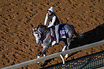 November 3, 2020: Rushie, trained by trainer Michael W. McCarthy, exercises in preparation for the Breeders' Cup Dirt Mile at Keeneland Racetrack in Lexington, Kentucky on November 3, 2020. John Voorhees/Eclipse Sportswire/Breeders Cup/CSM