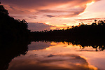 Sun set over riverine rainforest. Kinabatangan River, Sabah, Borneo.