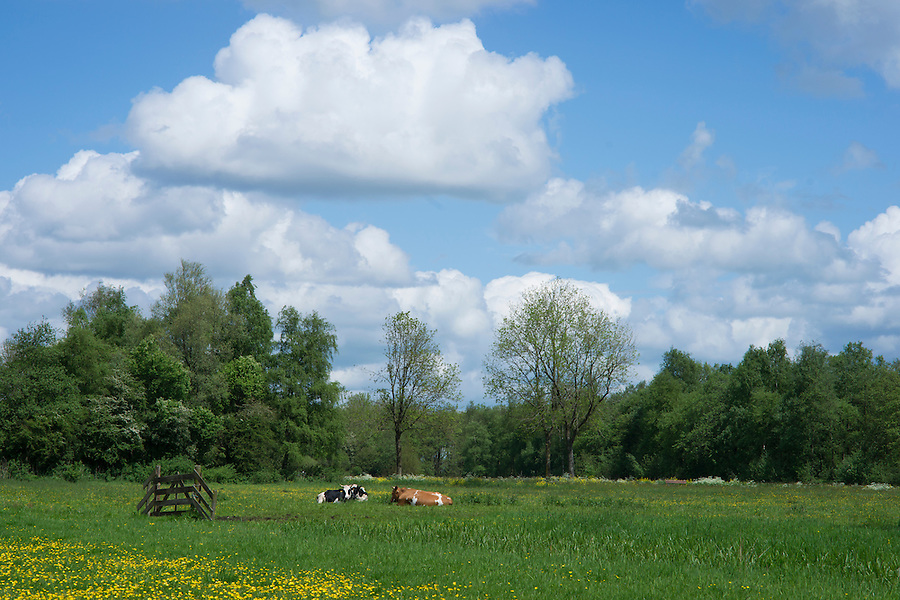 an eco friendly meadow with eco friendly cows