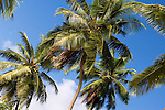 Seychelles, Island Mahe, Baie Lazare, Anse Gaulettes: palm trees and blue sky