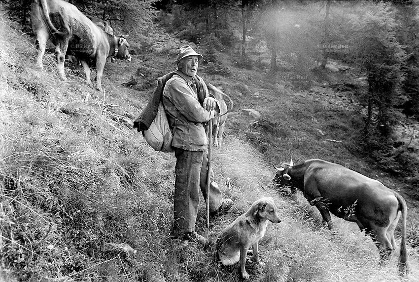 Switzerland. Canton Graubunden. Viano. Poschiavo valley. Luigi Merlo with his dog and his cow. Season spent by cows in mountains pastures. Swiss alpine farmers. Alps mountains peasants.  © 1994 Didier Ruef