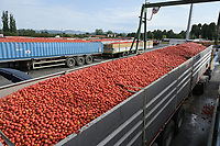 ITALY, Parma, Basilicanova, tomato canning company Mutti s.p.a., founded 1899, fresh plum tomatoes are conserved as canned tomato, pulpo, passata and tomato concentrate / ITALIEN, Parma, Basilicanova, Tomatenkonservenfabrik Firma Mutti spa, die frisch geernteten Flaschentomaten werden zu Dosentomaten, Passata und Tomatenmark verarbeitet und konserviert, alles 100 Prozent Italien, Anlieferung vom Feld