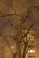 Buildings with Illuminated Windows at Night, Viewed thru Trees in Union Square Park, New York City, New York State, USA