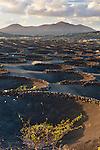 Spain, Canary Island, Lanzarote, La Geria: Vines growing in hollows dug in volcanic debris along Valle de la Geria | Spanien, Kanarische Inseln, Lanzarote, La Geria: Weinanbau - traditionelle Anbaumethode im Weinanbaugebiet La Geria
