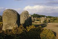 Europe/France/Bretagne/56/Morbilhan/Carnac: Alignements de Kermario