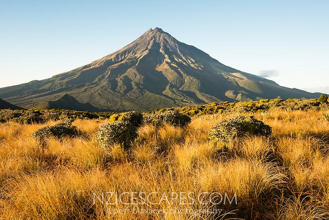 Morning views of Taranaki with field of alpine plants, Mt. Egmont, Egmont National Park, North Island, New Zealand, NZ