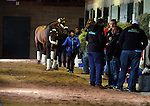 October 27, 2015:  American Pharoah arrives at Keeneland for the Breeder's Cup Classic.  American Pharoah trained by Bob Baffert, and owned by Zayat Stables, entered in the Breeder's Cup Classic Grade 1 $5,000,000.  Candice Chavez/ESW/CSM