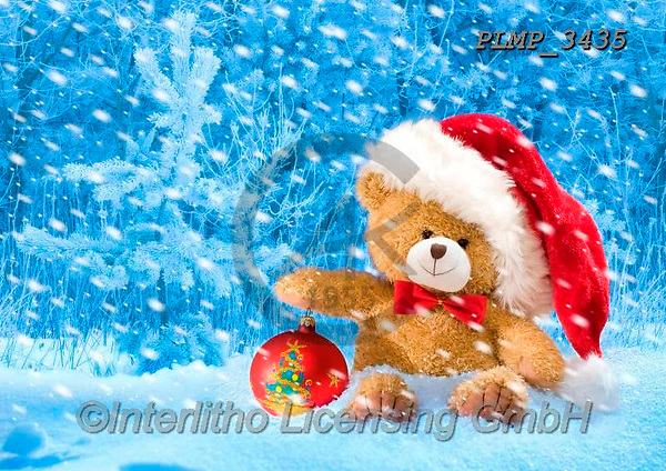 Marek, CHRISTMAS ANIMALS, WEIHNACHTEN TIERE, NAVIDAD ANIMALES,teddy bear, photos+++++,PLMP3435,#xa#
