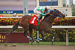 Falling Sky with jockey Luis Saez, wins 2 year old allowance race at Gulfstream Park.  Hallandale Beach Florida. 12-15-2012 (( Special transmission of horses in the Top 25 for points for the 2013 KentuckyDerby ))