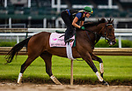 April 29, 2021: Millefeuille gallops in preparation for the Kentucky Oaks at Churchill Downs in Louisville, Kentucky on April 29, 2021. EversEclipse Sportswire/CSM