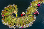 Colourfully dressed women in conical hats harvest huge bunches of water lilies.  The workers can be seen wading through the water to tend to the long-stemmed flowers.<br /> <br /> The flowers are the result of seasonal flooding and are sold as decorations at local markets and also used for tea and food.  The water lily season along the Mekong River Delta, in the Long An province of Vietnam, usually lasts from September to mid-November.  SEE OUR COPY FOR DETAILS.<br /> <br /> Please byline: Khanh Phan/Solent News<br /> <br /> © Khanh Phan/Solent News & Photo Agency<br /> UK +44 (0) 2380 458800