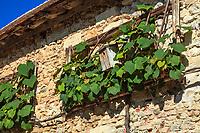 Les jardins du prieuré d'Orsan : les bâtiments avec contre le mur, une vigne de coignet taillée en rectangle, <br /> <br /> Mention obligatoire du nom du jardin et pas d'usage publicitaire sans autorisation préalable.