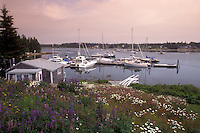 Bass Harbor, Maine, Mount Desert Island, Atlantic Ocean, Purple and white flowers sprinkle the hill that overlooks the boats docked in the quiet Bass Harbor.