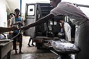 Workers offload, weigh and tag the sustainably caught yellow fin tuna at the Casa, the Tuna buying house in Puerto Princesa, Palawan in the Philippines. <br /> Photo: Sanjit Das/Panos for Greenpeace