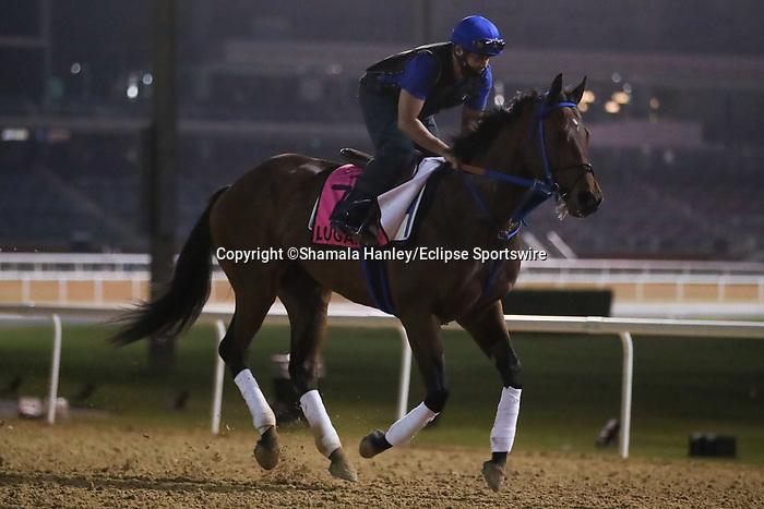 March 25, 2021: UAE Derby contender Lugamo trains on the track for trainer Antonio Sano at Meydan Racecourse, Dubai, UAE.<br /> Shamela Hanley/Eclipse Sportswire/CSM