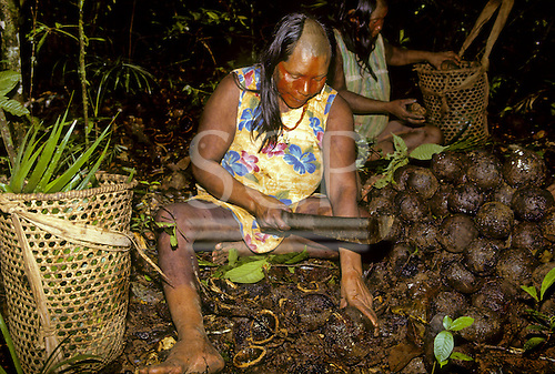 A-Ukre Village, Brazil. Kayapo woman with red and balck body paint breaking Brazil nuts.