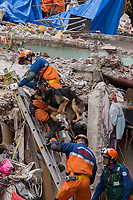 Rescue workers from Japan takes a dog trainned to locate survivors amist the debris of  a   collapsed building in the South of Mexico DF city.