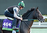 ARCADIA, CA - NOV 02: Tourist, owned by WinStar Farm, LLC, Adam Wachtel & Gary Barber and trained by William I. Mott, exercises in preparation for the Breeders' Cup Mile at Santa Anita Park on November 2, 2016 in Arcadia, California. (Photo by Douglas DeFelice/Eclipse Sportswire/Breeders Cup)