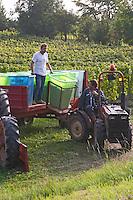 harvesting in plastic crates vineyard alsace france