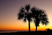 Sunset photo of palm trees and beach at Wild Dunes in the Isle of Palms, South Carolina.