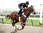 I'll Have Another exercises at Belmont Park in Elmont, NY on May 25, 2012.  The colt is preparing for the Belmont Stakes on June 9th and a shot to be the first Triple Crown winner since Affirmed in 1978.