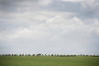 stretched peloton<br /> <br /> stage 3: Buchten - Buchten (NLD/210km)<br /> 30th Ster ZLM Toer 2016