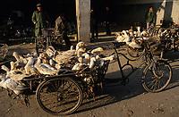 Asie/Chine/Jiangsu/Env Nankin: Marché libre de la rue Shan-Xi - Marché aux oiseaux et aux canards de tradition séculaire<br /> PHOTO D'ARCHIVES // ARCHIVAL IMAGES<br /> CHINE 1990