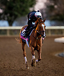 November 4, 2020: Editor At Large, trained by trainer Chad C. Brown, exercises in preparation for the Breeders' Cup Juvenile Fillies Turf at Keeneland Racetrack in Lexington, Kentucky on November 4, 2020. Alex Evers/Eclipse Sportswire/Breeders Cup