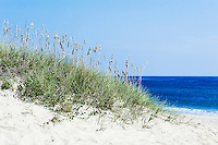 Dune grass and beach, Outer Banks, North Carolina, USA