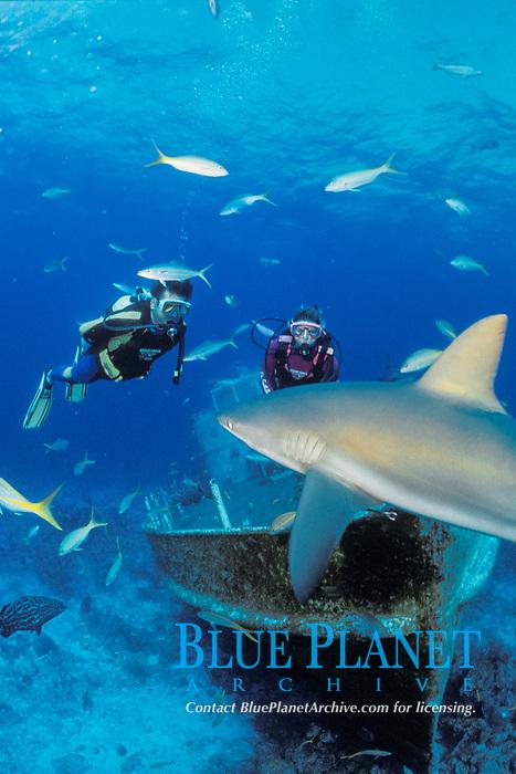 scuba divers observe Caribbean reef shark, Carcharhinus perezii, Bahamas, Caribbean Sea, Atlantic