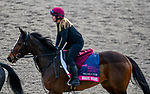 January 23, 2020: Magic Wand jogs on the main track as horses prepare for the Pegasus World Cup Invitational at Gulfstream Park Race Track in Hallandale Beach, Florida. John Voorhees/Eclipse Sportswire/CSM
