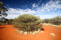 Desert Plant in the Red Centre, Australia