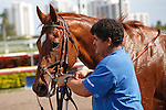 Animal Kingdom and groom after winning his 2012 debut at Gulfstream Park, Hallandale Beach Florida.