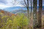 The Deep Creek Valley, Great Smoky Mountains National Park, North Carolina, USA