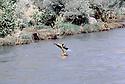 Irak 1985  Dans les zones libérées, région de Lolan, peshmerga traversant une riviere a la nage avec sa kalachnikov  Iraq 1985 In liberated areas, Lolan district, a peshmerga swimming across a river with his kalachnikov