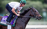 Carina Mia, owned by Three Chimneys Farm LLC and trained by William I. Mott, exercises in preparation for the Breeders' Cup Filly & Mare Sprint **ENTERED IN MULTIPLE RACES**