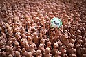 """19/06/18<br /> <br /> ***With Video***<br /> <br /> A terracotta army of football players and supporters has been unveiled just in time to celebrate England's World Cup win on Monday night. <br /> <br /> The 5000 figures, known as Our Game, depict the Shrovetide game - where it is thought the modern game of football has its roots. <br /> <br /> More than 3000 people in Ashbourne, Derbyshire helped to make the pieces that make up the stunning, Arts Council-funded, artwork in the town's St Oswald's Church.<br /> <br /> Sarah Heaton (left) and Helen Cammiss from 'The Clayrooms' spent a week arranging the display where the ball is seen above the players in the centre (or hug as it's known) of the game. """"This is a community project involving clay - the Shrovetide game is one thing that unites the community - it's embodied in everyone and unites the town"""" said Sarah.<br /> <br /> <br /> All Rights Reserved: F Stop Press Ltd. +44(0)1335 344240  www.fstoppress.com www.rkpphotography.co.uk"""