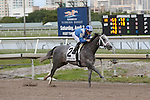 HALLANDALE BEACH, FL - JANUARY 30:      Mohaymen #2 with Junior Alvarado on board  comes down the final stretch to win the 31st running of the Holy Bull Stakes (G2) at Gulfstream Park on January 30, 2016 in Hallandale Beach, Florida. (Photo by Liz Lamont)
